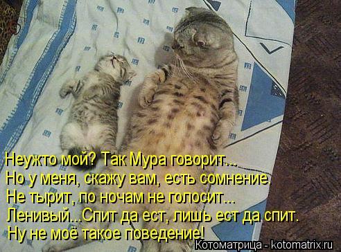 Котоматрица: Неужто мой? Так Мура говорит... Но у меня, скажу вам, есть сомнение. Не тырит, по ночам не голосит... Ленивый...Спит да ест, лишь ест да спит. Ну не