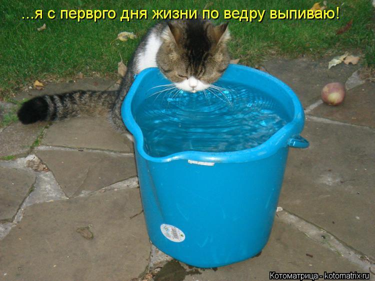 Котоматрица: ...я с перврго дня жизни по ведру выпиваю!