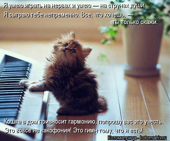 Котоматрица: Я умею играть на нервах и умею — на струнах души. Я сыграю тебе непременно. Все, что хочешь, —  ты только скажи. Кошка в дом привносит гармони
