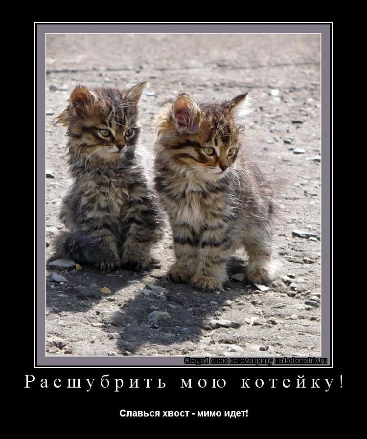 Котоматрица: Расшубрить мою котейку! Славься хвост - мимо идет!