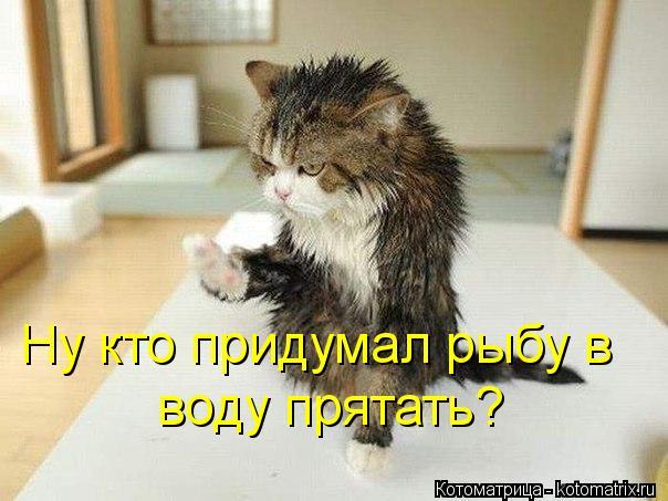 Котоматрица: Ну кто придумал рыбу в   воду прятать?