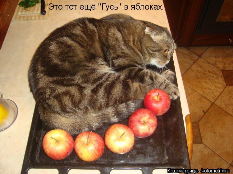 """Котоматрица: Это тот ещё """"Гусь"""" в яблоках."""