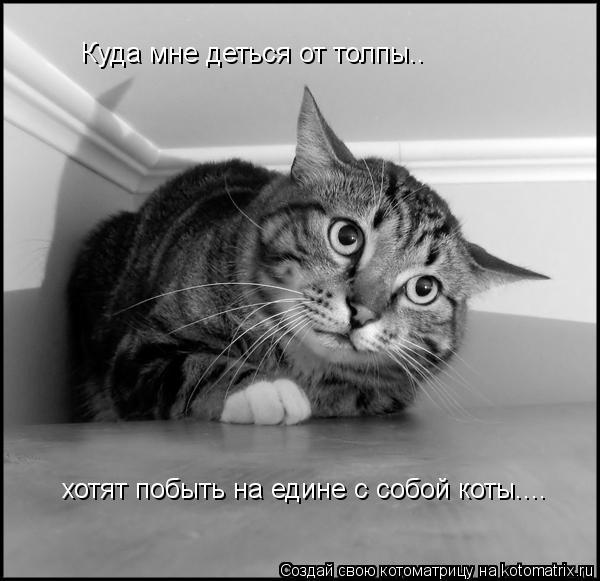 Котоматрица: Куда мне деться от толпы.. хотят побыть на едине с собой коты....