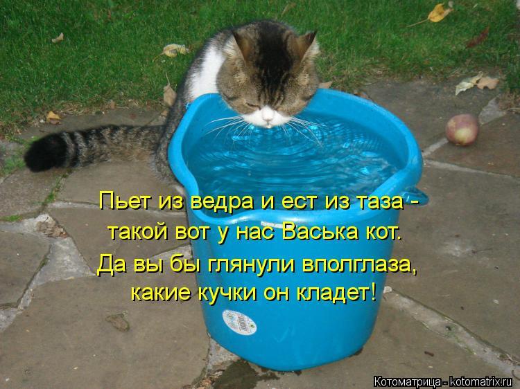 Котоматрица: какие кучки он кладет! Пьет из ведра и ест из таза -  такой вот у нас Васька кот. Да вы бы глянули вполглаза,