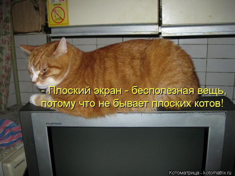 Котоматрица: - Плоский экран - бесполезная вещь, потому что не бывает плоских котов!