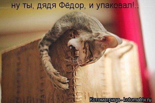 Котоматрица: ну ты, дядя Фёдор, и упаковал!..