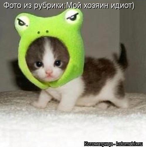 Котоматрица: Фото из рубрики:Мой хозяин идиот)