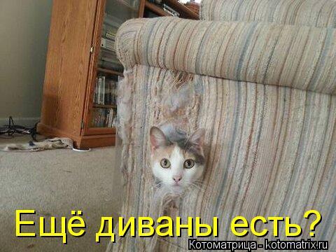Котоматрица: Ещё диваны есть?