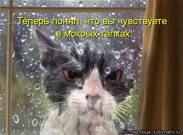Котоматрица: ...Теперь понял, что вы чувствуете в мокрых тапках!