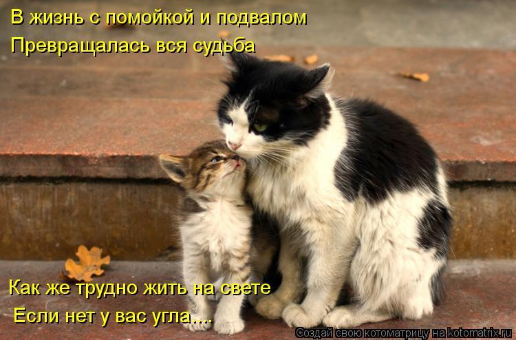 Котоматрица: В жизнь с помойкой и подвалом Превращалась вся судьба Как же трудно жить на свете Если нет у вас угла....