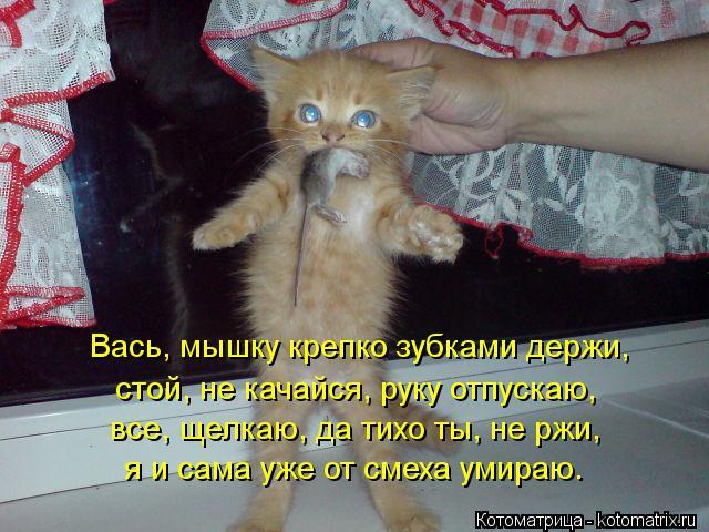 Котоматрица: Вась, мышку крепко зубками держи, стой, не качайся, руку отпускаю, все, щелкаю, да тихо ты, не ржи, я и сама уже от смеха умираю.