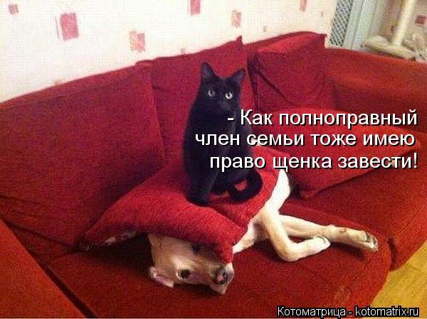 Котоматрица: - Как полноправный  член семьи тоже имею  право щенка завести!