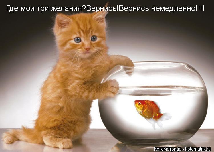 Котоматрица: Где мои три желания?Вернись!Вернись немедленно!!!!