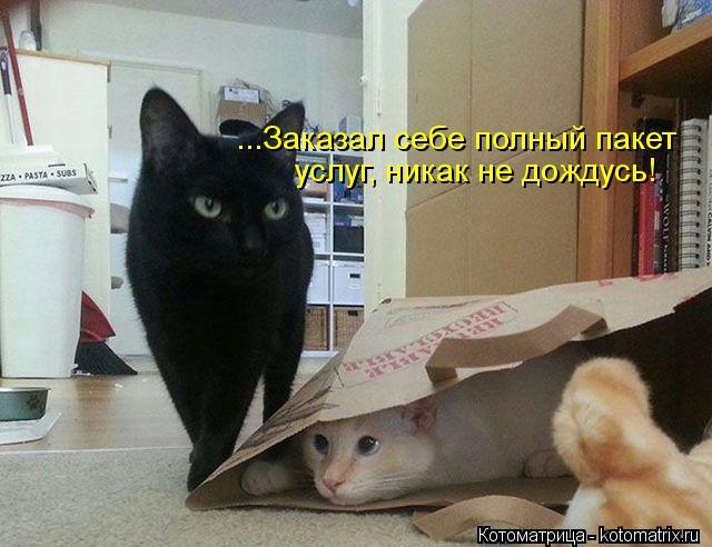 Котоматрица: ...Заказал себе полный пакет  услуг, никак не дождусь!