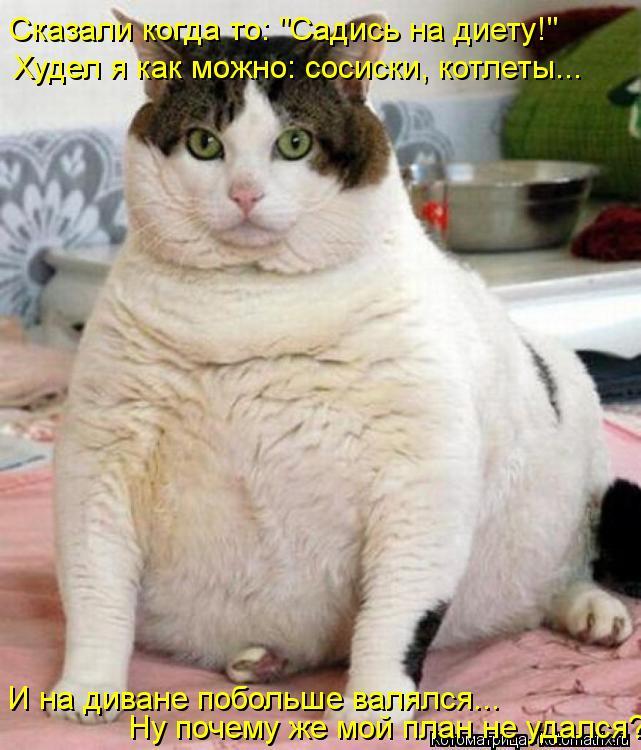 """Котоматрица: Сказали когда то: """"Садись на диету!"""" Худел я как можно: сосиски, котлеты... И на диване побольше валялся... Ну почему же мой план не удался?"""