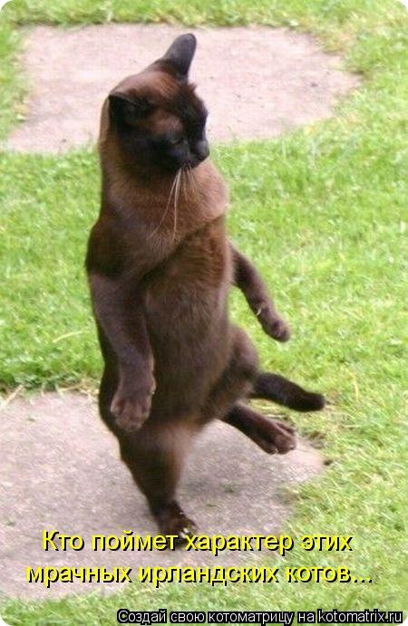 Котоматрица: Кто поймет характер этих мрачных ирландских котов...