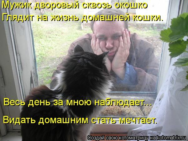 Котоматрица: Весь день за мною наблюдает... Видать домашним стать мечтает. Мужик дворовый сквозь окошко Глядит на жизнь домашней кошки.