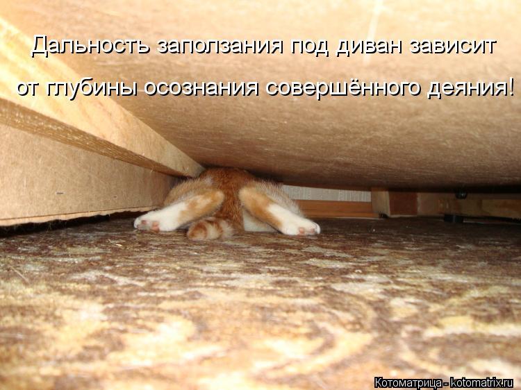 Котоматрица: Дальность заползания под диван зависит от глубины осознания совершённого деяния!