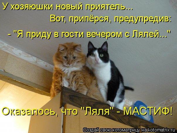 """Котоматрица: У хозяюшки новый приятель...  Вот, припёрся, предупредив: - """"Я приду в гости вечером с Лялей...""""  Оказалось, что """"Ляля"""" - МАСТИФ!"""