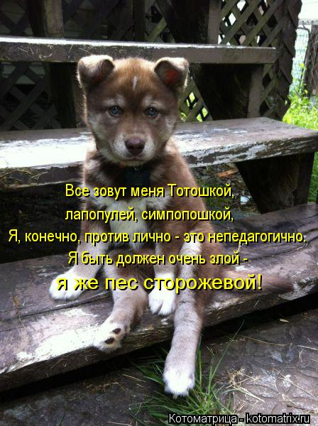 Котоматрица: Я, конечно, против лично - это непедагогично. лапопулей, симпопошкой, Я быть должен очень злой -  Все зовут меня Тотошкой,  я же пес сторожевой!