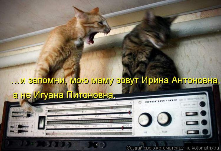 Котоматрица: …и запомни, мою маму зовут Ирина Антоновна, а не Игуана Питоновна.
