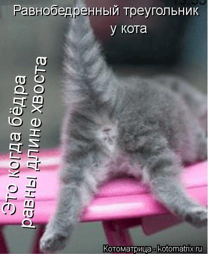 Котоматрица: Равнобедренный треугольник  у кота Это когда бёдра  равны длине хвоста