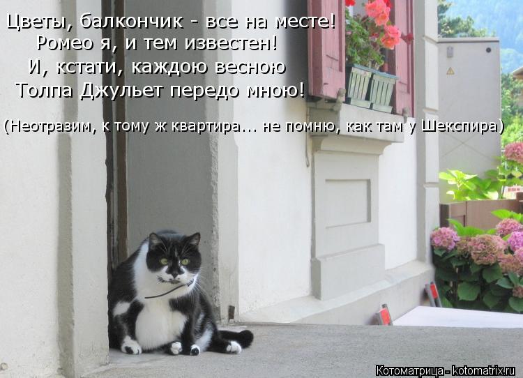 Котоматрица: Цветы, балкончик - все на месте! Ромео я, и тем известен! И, кстати, каждою весною Толпа Джульет передо мною! (Неотразим, к тому ж квартира... не