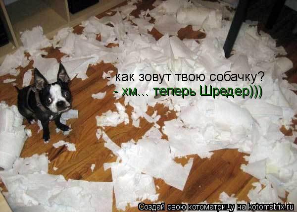 Котоматрица: - как зовут твою собачку? - хм... теперь Шредер)))