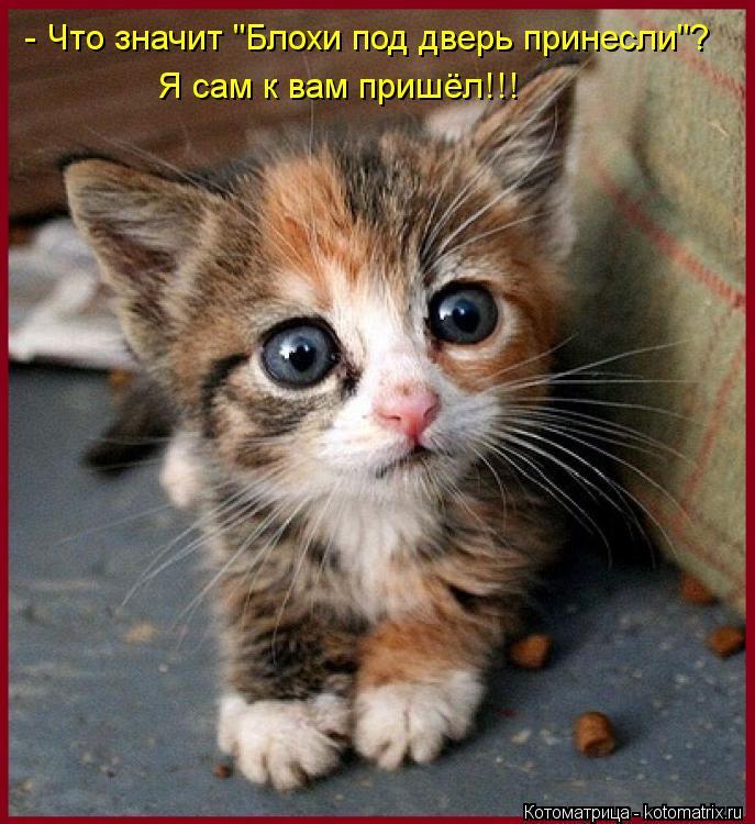 """Котоматрица: - Что значит """"Блохи под дверь принесли""""? Я сам к вам пришёл!!!"""