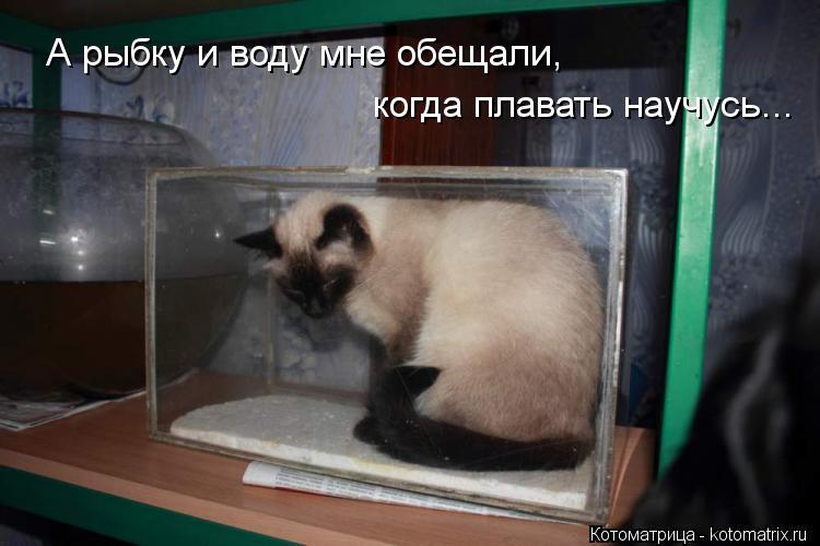 Котоматрица: А рыбку и воду мне обещали, когда плавать научусь...