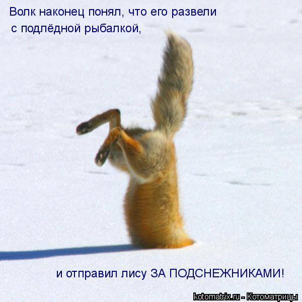 Котоматрица: Волк наконец понял, что его развели   с подлёдной рыбалкой, и отправил лису ЗА ПОДСНЕЖНИКАМИ!
