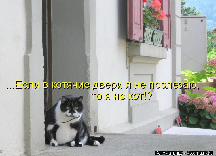 Котоматрица: ...Если в котячие двери я не пролезаю, то я не кот!?