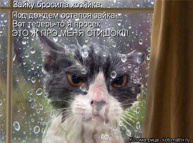 Котоматрица: Зайку бросила хозяйка, Под дождем остался зайка... Вот теперь-то я просек: ЭТО Ж ПРО МЕНЯ СТИШОК!!!