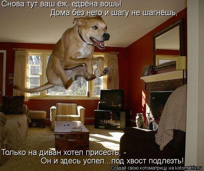 Котоматрица: Снова тут ваш ёж, едрёна вошь! Дома без него и шагу не шагнёшь, Только на диван хотел присесть, -  Он и здесь успел...под хвост подлезть!