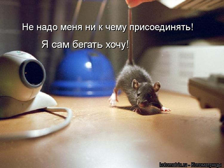 Котоматрица: Не надо меня ни к чему присоединять! Я сам бегать хочу!