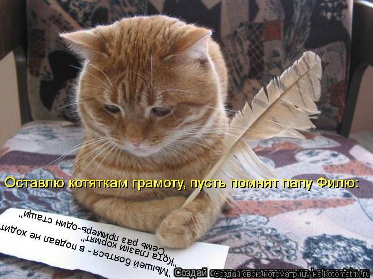 """Котоматрица: """"Мышей бояться - в подвал не ходить"""" """"Кота глазки кормят"""" """"Семь раз примерь-один стащи"""" Оставлю котяткам грамоту, пусть помнят папу Филю:"""