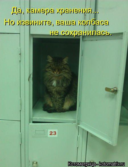 Котоматрица: Да, камера хранения... Но извините, ваша колбаса  не сохранилась.