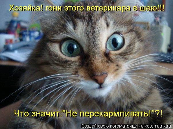 """Котоматрица: Хозяйка! гони этого ветеринара в шею!!! Что значит:""""Не перекармливать!""""?!"""
