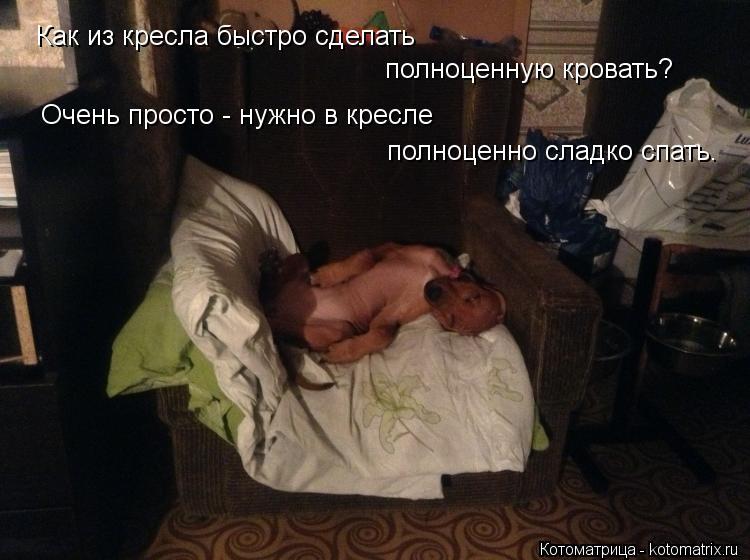 Котоматрица: Как из кресла быстро сделать полноценную кровать? Очень просто - нужно в кресле полноценно сладко спать.