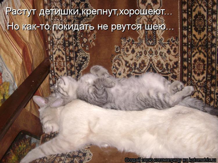 Котоматрица: Растут детишки,крепнут,хорошеют... Но как-то покидать не рвутся шею...