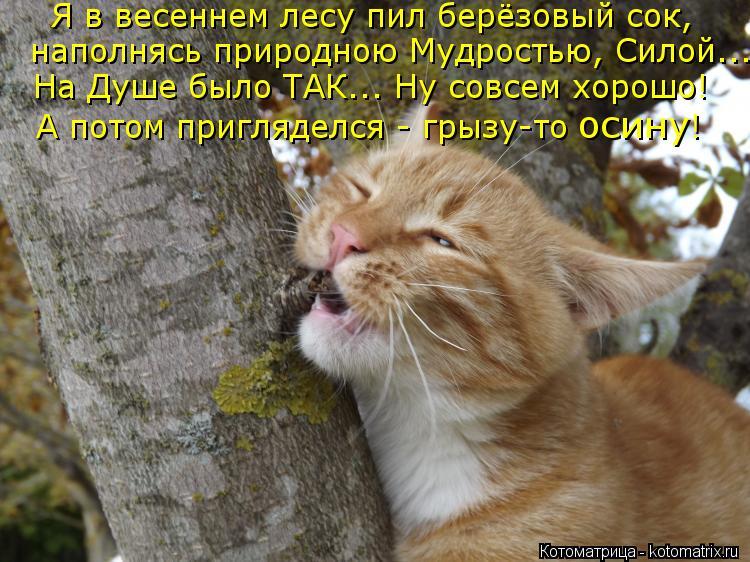 Котоматрица: Я в весеннем лесу пил берёзовый сок, наполнясь природною Мудростью, Силой... На Душе было ТАК... Ну совсем хорошо! А потом пригляделся - грызу-т