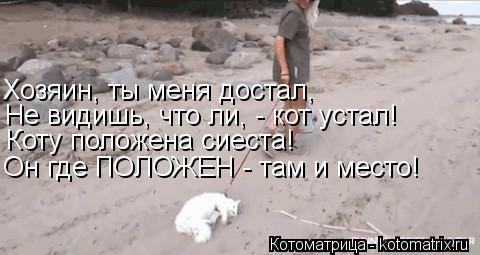 Котоматрица: Хозяин, ты меня достал, Не видишь, что ли, - кот устал! Коту положена сиеста! Он где ПОЛОЖЕН - там и место!