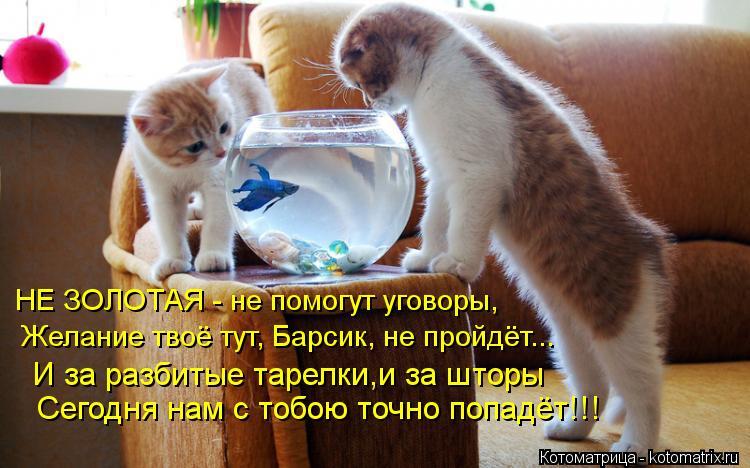Котоматрица: НЕ ЗОЛОТАЯ - не помогут уговоры,  Желание твоё тут, Барсик, не пройдёт...  И за разбитые тарелки,и за шторы  Сегодня нам с тобою точно попадёт!!!