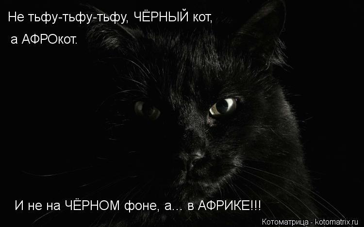 Котоматрица: Не тьфу-тьфу-тьфу, ЧЁРНЫЙ кот, а АФРОкот. И не на ЧЁРНОМ фоне, а... в АФРИКЕ!!!