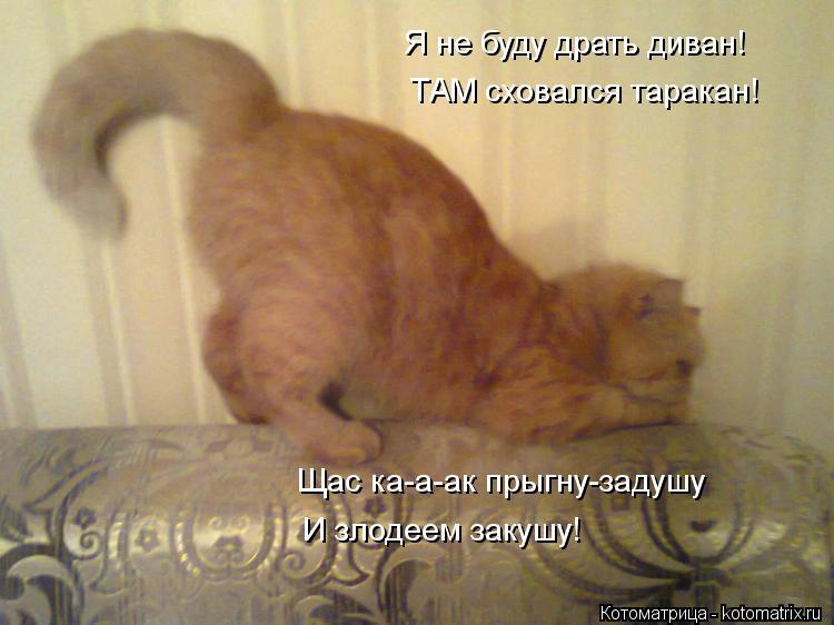 """- Я не буду драть диван!"