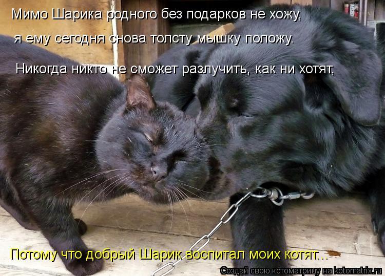 Котоматрица: Мимо Шарика родного без подарков не хожу,  я ему сегодня снова толсту мышку положу. Потому что добрый Шарик воспитал моих котят... Никогда ни