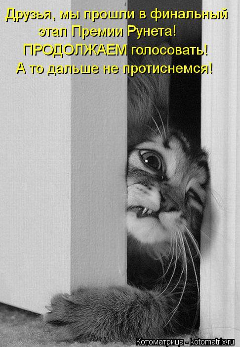 Котоматрица: Друзья, мы прошли в финальный  этап Премии Рунета!  ПРОДОЛЖАЕМ голосовать!  А то дальше не протиснемся!