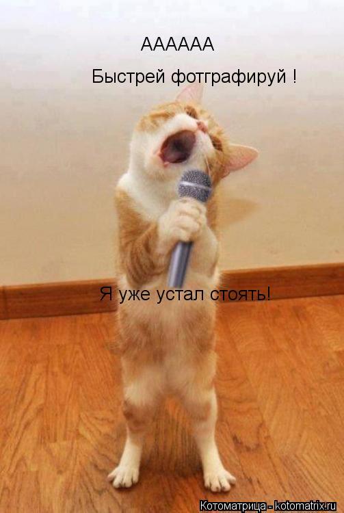 http://kotomatrix.ru/images/lolz/2013/11/03/kotomatritsa_EC.jpg