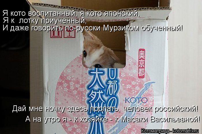 Котоматрица: Я к  лотку приученный, И даже говорить по-русски Мурзиком обученный! Я кото воспитанный, я кото японский, Дай мне ночку здесь поспать, челове