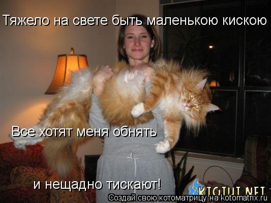Котоматрица: Тяжело на свете быть маленькою кискою -  Все хотят меня обнять  и нещадно тискают!